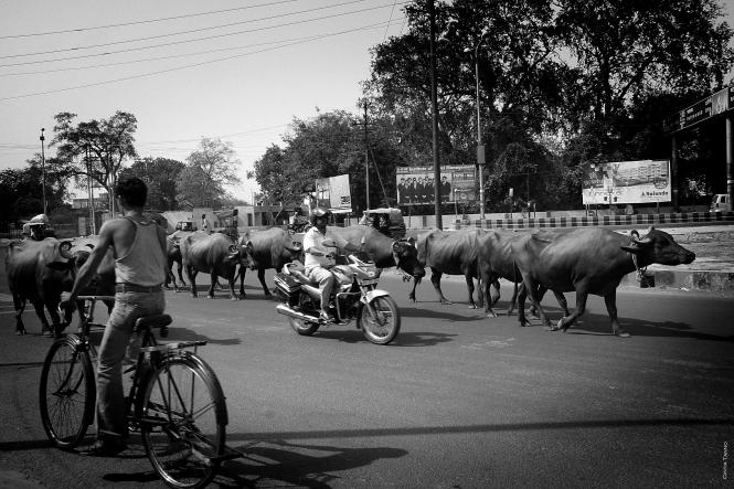 Viagem Índia Agra